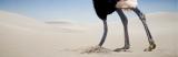 The Biblical Scholar-Linguist: An Ostrich amongRobins